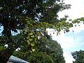 06416jfMabalas Balas Diliman I Salapungan San Rafael Upig Ildefonso Bulacan Roadfvf 07.jpg