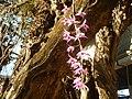 07089jfMaharlika Highway Orchids Handicrafts San Rafael Bulacanfvf 47.jpg