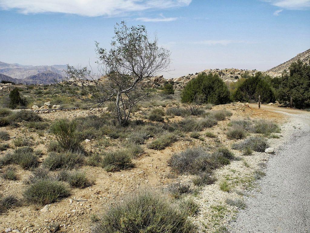 09 Rummana Mountain Trail - Vegetation on the Trail - panoramio