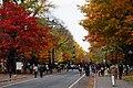 131103 Hokkaido University Sapporo Hokkaido Japan12s5.jpg