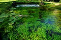150510 174916 Giardino di Ninfa.jpg