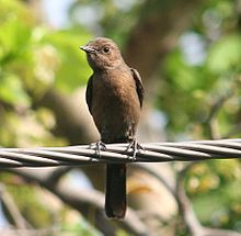1708w brown-rock-chat delhi-gk2 2007apr16 08.32.jpg