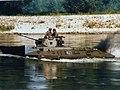 1986-07-18 Schwimmen mit Luchs.jpg