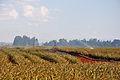 2011-03-11 14-45-20 Kenya Central Thika.jpg