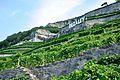 2012-08-12 10-32-40 Switzerland Canton de Vaud Chexbres.JPG