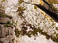20121027 0757 Sintra 31.jpg