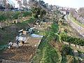 2013 Jardins familiaux a Saint-Cloud pres du tramway T2 depuis la passerelle de l Avre.JPG