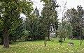 2014 Krosnowice, park przy dworze, 07.JPG