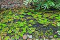 2016 Singapur, Ogrody botaniczne (238).jpg