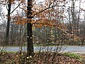 2020-12-12-Hike-to-Rheydt-Palace-and-its-surroundings.-Foto-41.jpg