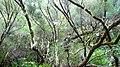 25 fontes levada madeira - panoramio - azoren66 (2).jpg