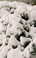 317 winter-5 (11741902575).jpg