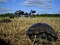 79xs11-turtle.jpg