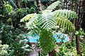 A010 Australia Cap Tribulation Natural Fern Tree as Umbrella (5051659371).jpg