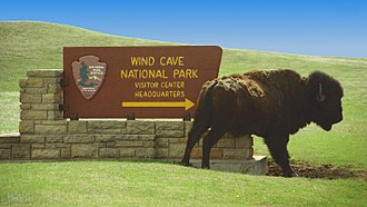 Wind Cave National Park - A bison scratches against the stone base of a park sign.