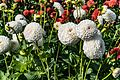 ADD SOME COLOUR TO YOUR LIFE (FLOWERS IN A PUBLIC PARK)-120120 (29164811062).jpg