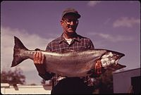 AL BREWER DISPLAYS A 35 POUND CHINOOK SALMON CAUGHT BY HIS WIFE ON THE LOWER SKAGIT RIVER NEAR LA CONNOR IN NORTHERN... - NARA - 552315.jpg