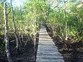 APA Guaraqueçaba - Sebui elevated path.JPG