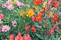 A Collection of Flowers from Ooty046.jpg