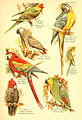 A book of birds (Plate XVIII) (6021711353).jpg