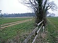 A gap in the hedge - geograph.org.uk - 382392.jpg
