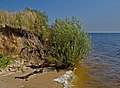 A riverside of Dnieper near the village Yasnogorodka, Ukraine.jpg