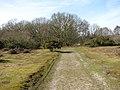 A sandy track through Wortham Ling - geograph.org.uk - 1770270.jpg
