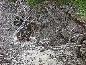 North Island (Houtman Abrolhos) - Image: Abrolhos North Island 3