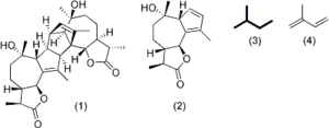 Absinthin - Illustration of the isoprenoid components involved in the biosynthesis of Absinthin