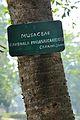 Acharya Jagadish Chandra Bose Indian Botanic Garden - Howrah 2011-01-08 9864.JPG