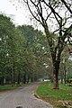 Acharya Jagadish Chandra Bose Indian Botanic Garden - Howrah 2011-02-20 1634.JPG
