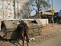 Ahmedabad2007-113.JPG