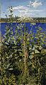 Akseli Gallen-Kallela - Wild Angelica - Google Art Project.jpg