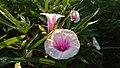 Alam, Indonesia dan Fotografi.jpg