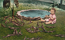 Alligator farm Los Angeles 1906.jpg