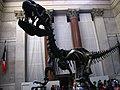 Allosaurus II (7231148650).jpg