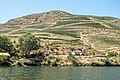 Alto Douro Vinhateiro DSC00254 (36492332224).jpg