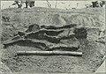 Am Tendaguru - Leben und Wirken einer deutschen Forschungsexpedition zur Ausgrabung vorweltlicher Riesensaurier in Deutsch-Ostafrika (1912) (18166384901).jpg