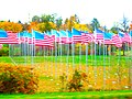 American Flags - panoramio.jpg