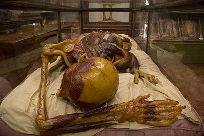 Anatomic masterpiece.JPG