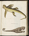 Animal drawings collected by Felix Platter, p1 - (31).jpg