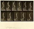 Animal locomotion. Plate 126 (Boston Public Library).jpg