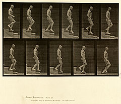 Animal locomotion. Plate 126 (Boston Public Library).jpg