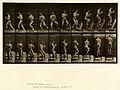 Animal locomotion. Plate 151 (Boston Public Library).jpg