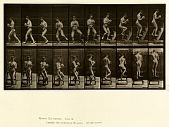 Animal locomotion. Plate 151 (Boston Public Library).jpg