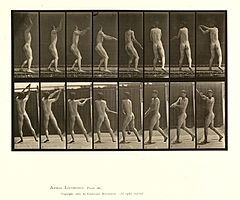 Animal locomotion. Plate 309 (Boston Public Library).jpg