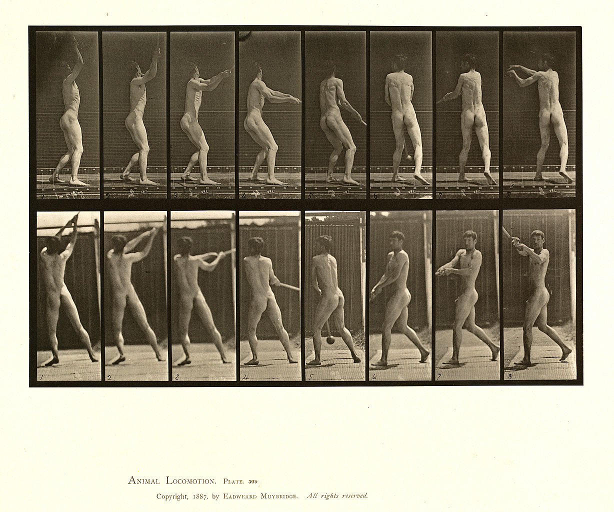 Movement and Types of Locomotion