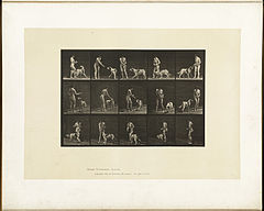 Animal locomotion. Plate 514 (Boston Public Library).jpg