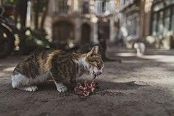 عکس از غذا خوردن یک گربه در بازار تبریز
