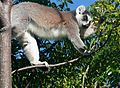 Anja réserve (Madagascar) - 06.JPG